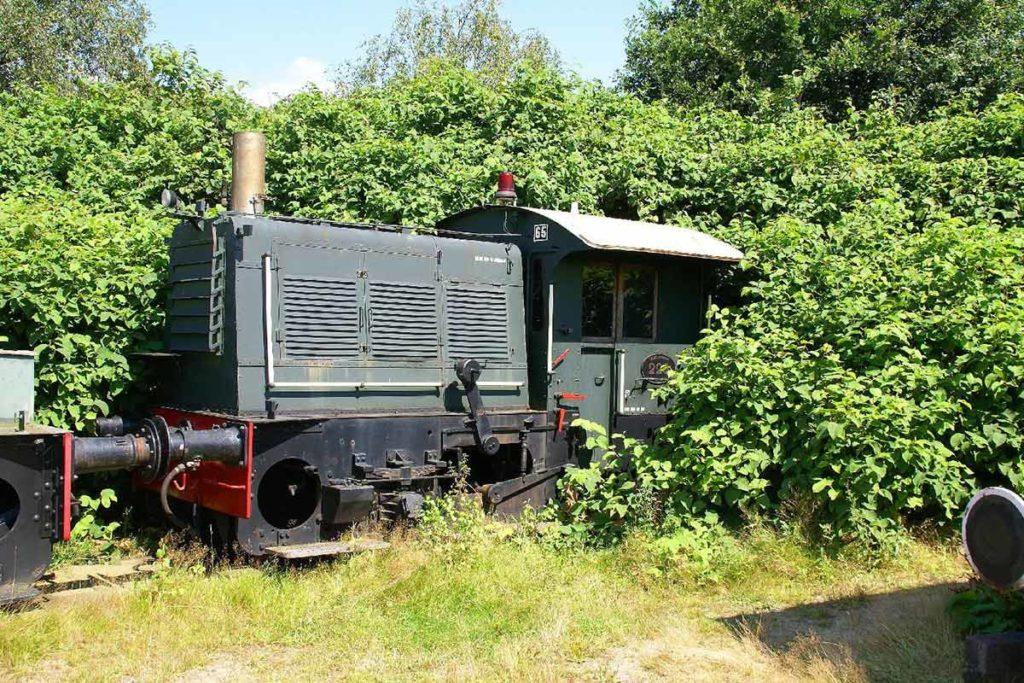 Japanese Knotweed Fallopia overgrows a train